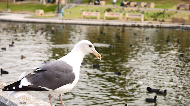 Shot of a seagull. Like the black eyes, such detail for a bird.